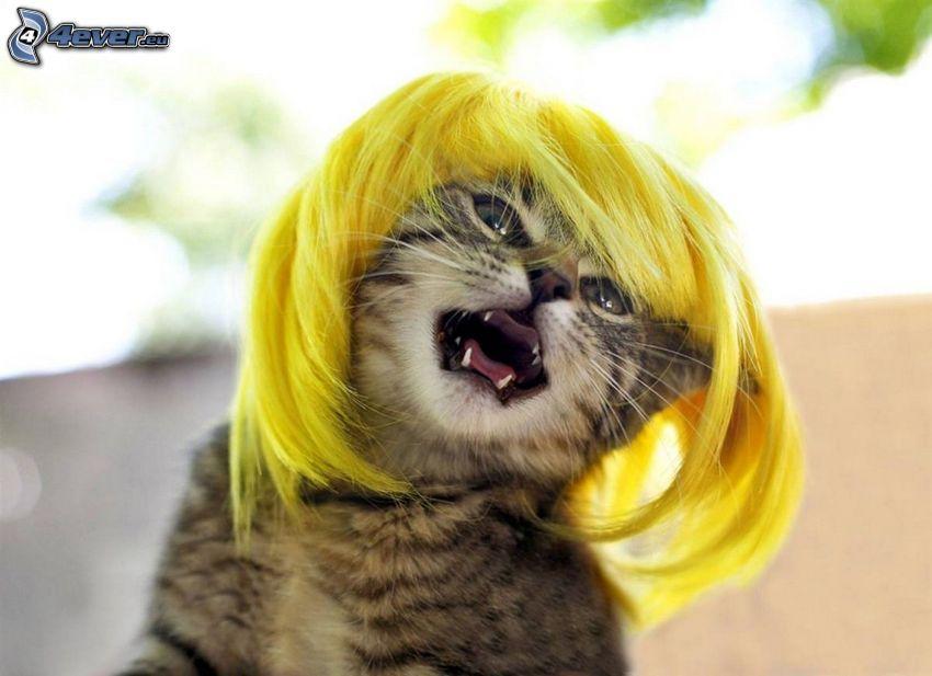katt, peruk