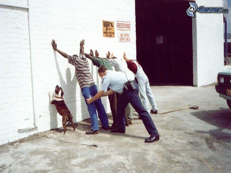 kontroll, polis, hund