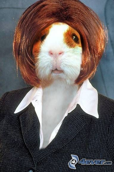 kvinna, hamster