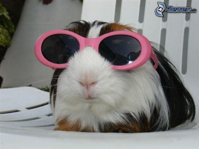 marsvin, solglasögon