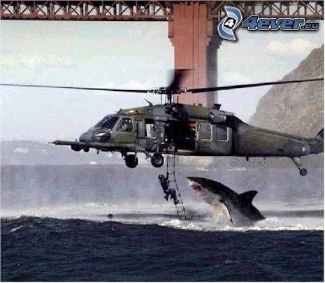 nedstigning från helikopter, haj, människa, vatten, räddningsarbetare