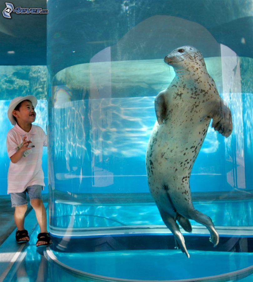 säl, akvarium