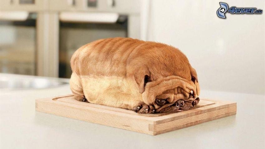 sharpei valp, toast, bräda