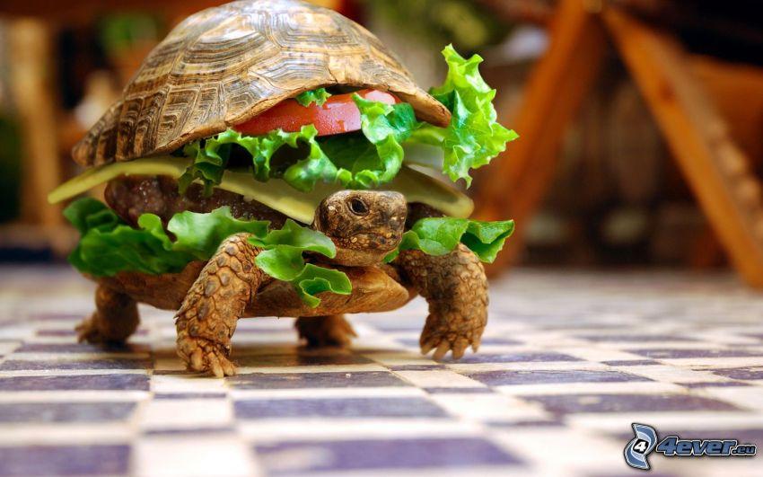 sköldpadda, hamburger