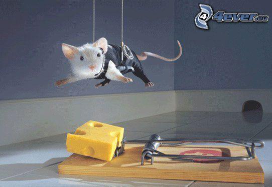 spion, mus, fälla, ost
