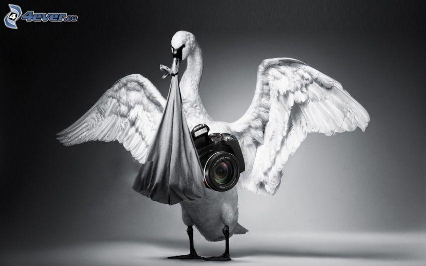 svan, kamera, vingar, lakan
