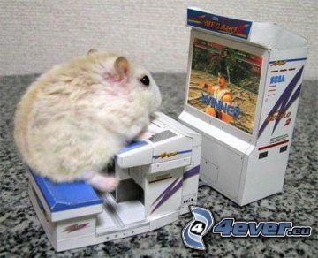 hamster, spel, roligt