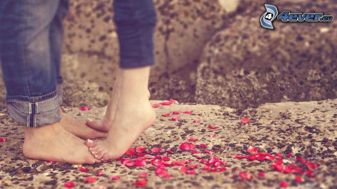 pareja, pies, pétalos de rosa