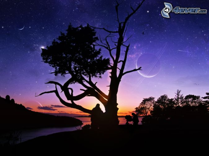 silueta de un árbol, cielo de noche, mes, estrellas, siluetas