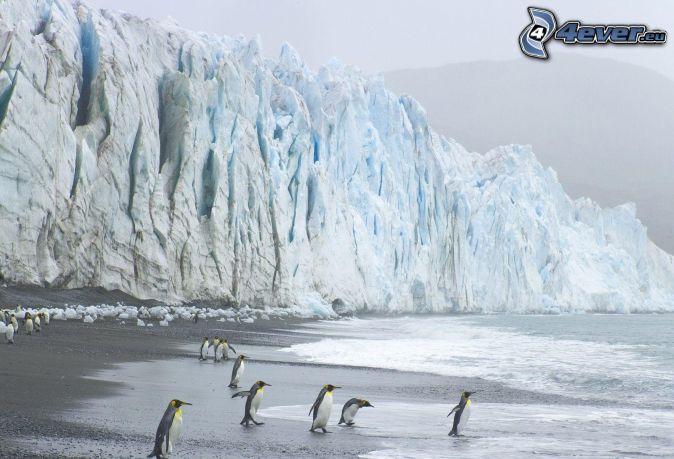 pingüinos, glaciar