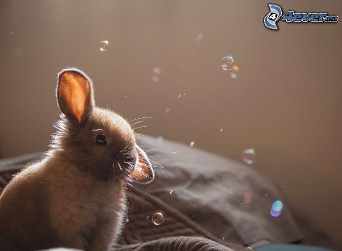 conejito, burbujas