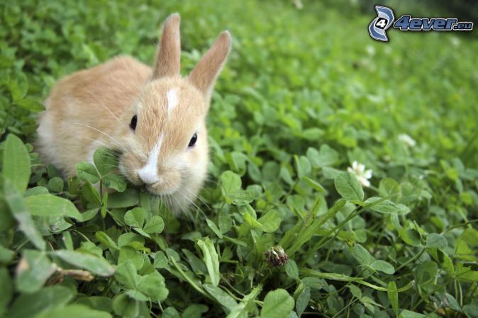 conejito, hierba