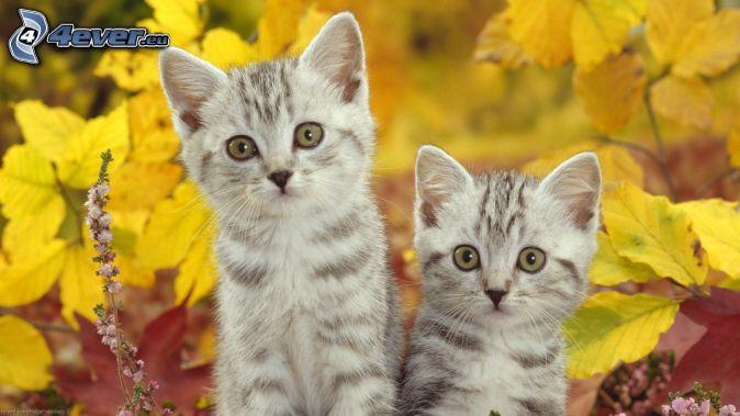 gatitos, hojas amarillas