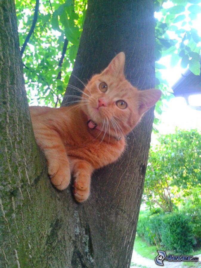 Gato en un rbol - Arbol gato ikea ...