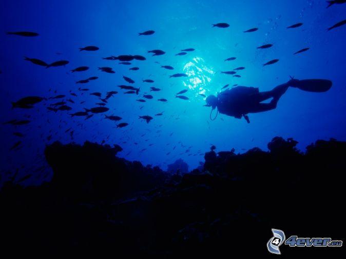 Fotos fondo del mar peces imagui - Fotos fondo del mar ...