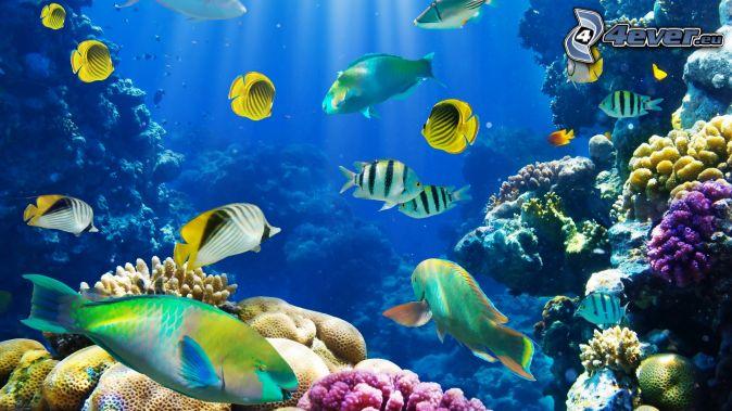 Imagenes del fondo del mar animado imagui - Fotos fondo del mar ...