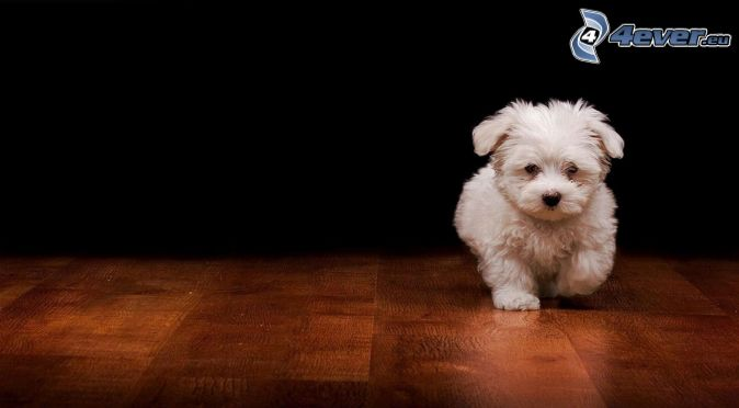 2018 blanco estilo perrito