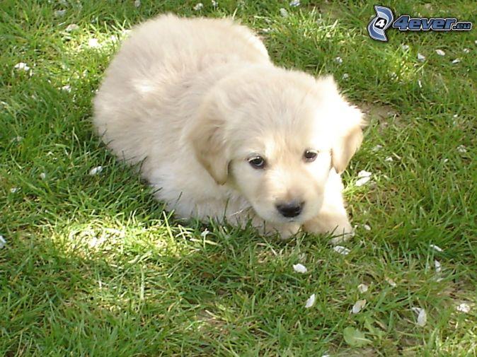 asombroso blanco estilo perrito en Granada