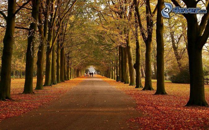 parque de otoño, camino, hojas de otoño