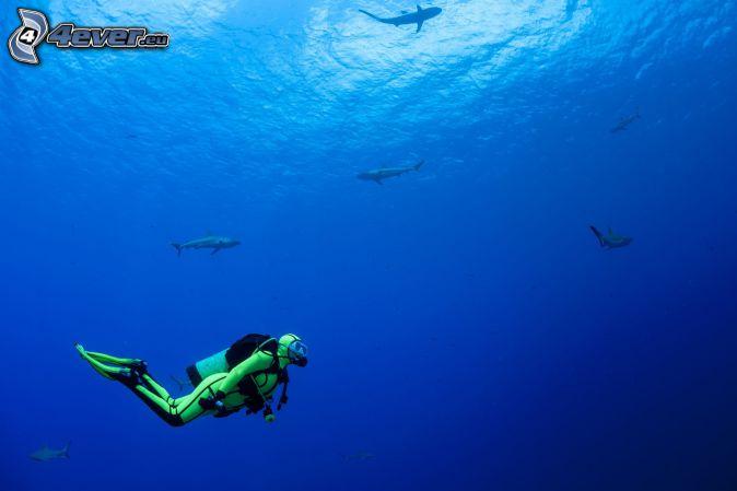 buceador, tiburones