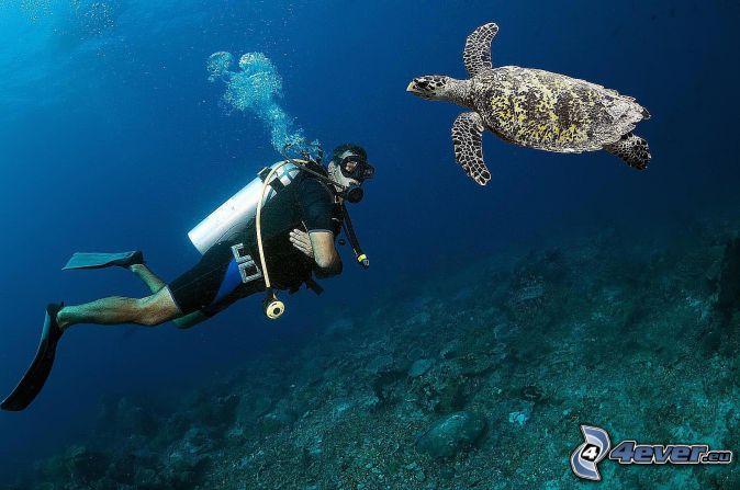 buceador, tortuga marina