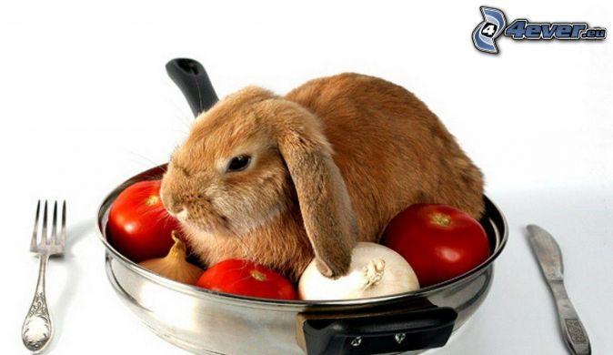 conejito, tomates, ajo, cebolla, cubiertos, comida