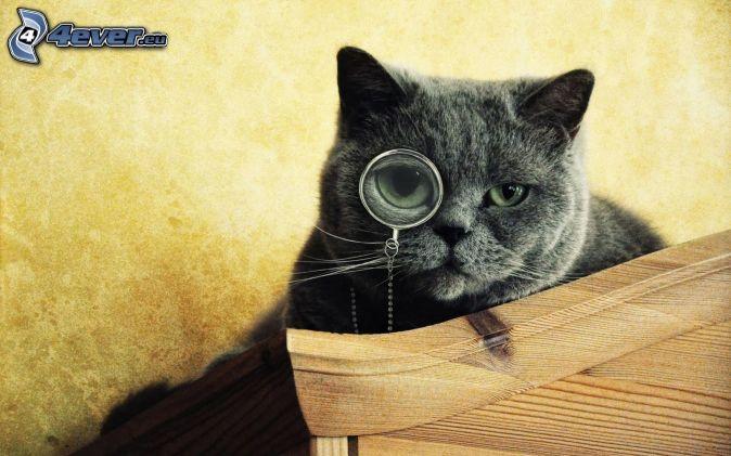 Resultado de imagen para imagen lupa gato