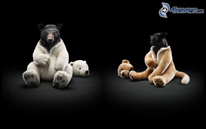 oso negro, puma, traje