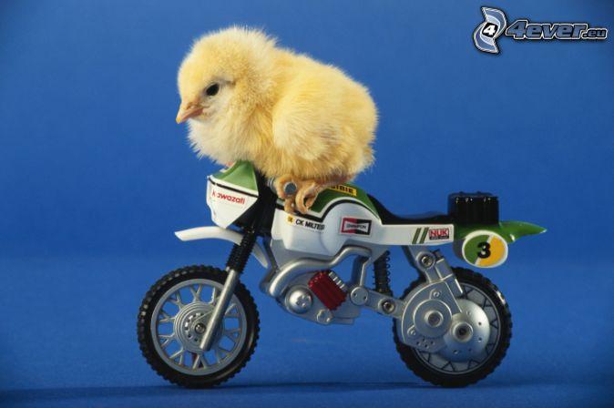 Regala una imagen al usuario de arriba... - Página 8 Pollito,-motocicleta-166089