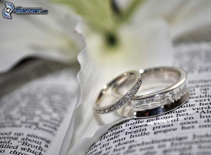 anillos, libro, text
