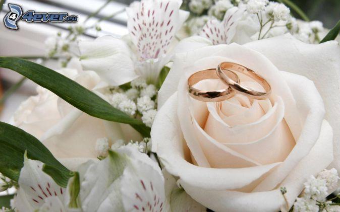 anillos, Rosa Blanca, lirio
