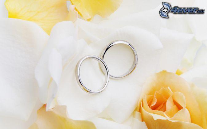 anillos, rosas amarillas, pétalos
