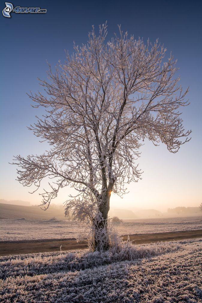 árbol nevado, camino, puesta del sol