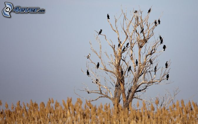Arboles Secos árboles Secos Bandada de