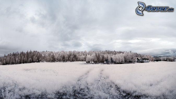 bosque nevado, prado cubierto de nieve