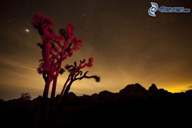 Joshua Tree National Park, árbol, sierra, después de la puesta del sol, cielo de noche
