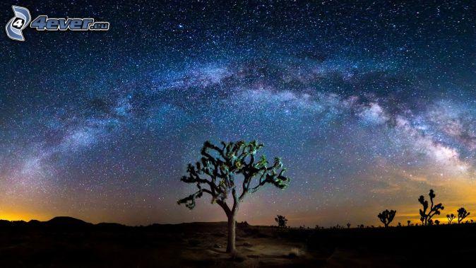 Joshua Tree National Park, árboles, cielo de noche, cielo estrellado
