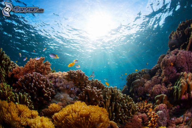 corales marinos, fondo del mar, rayos de sol, pez coral