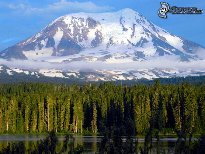 Montaña Nevada Hd: Bosques De Coníferas