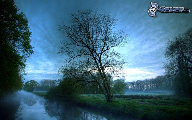 árbol junto al río, niebla baja, mañana nebulosa, árboles