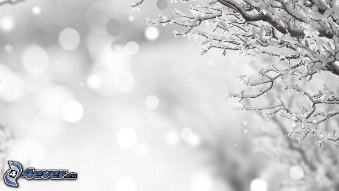 ramas cubiertas de nieve, la nevada