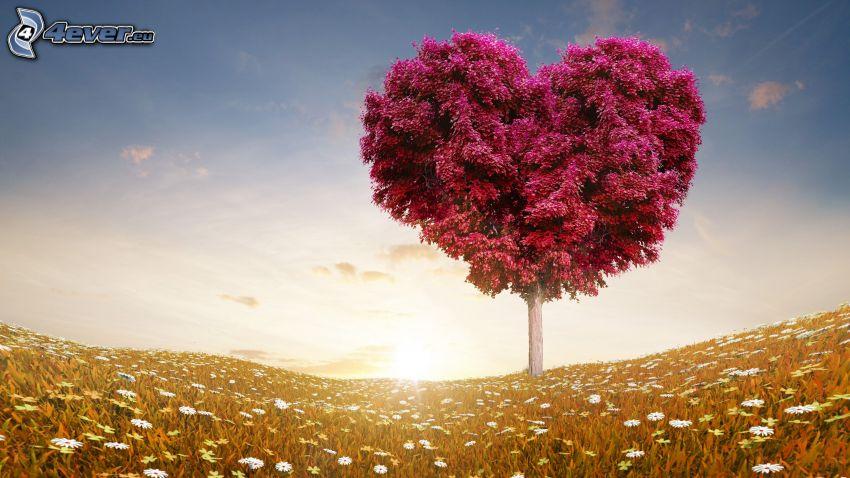 árbol, corazón, puesta de sol en la pradera, cielo azul, margaritas