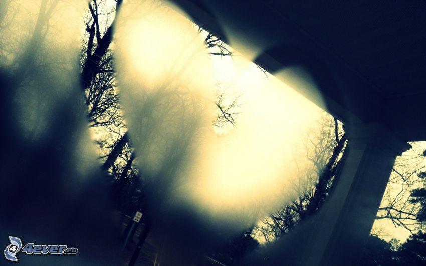 corazón, árboles