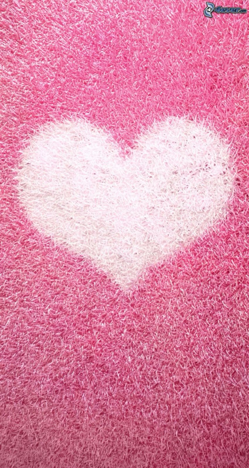 corazón, fondo de color rosa