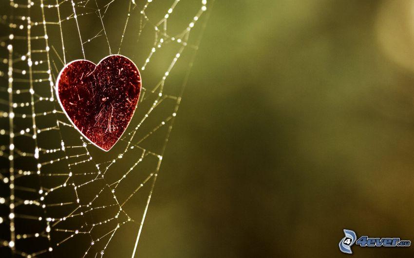 corazón, tela de araña con gotas de agua