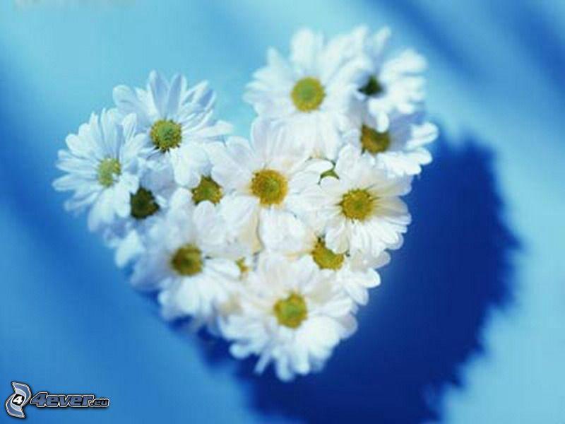 corazón de flores, margaritas