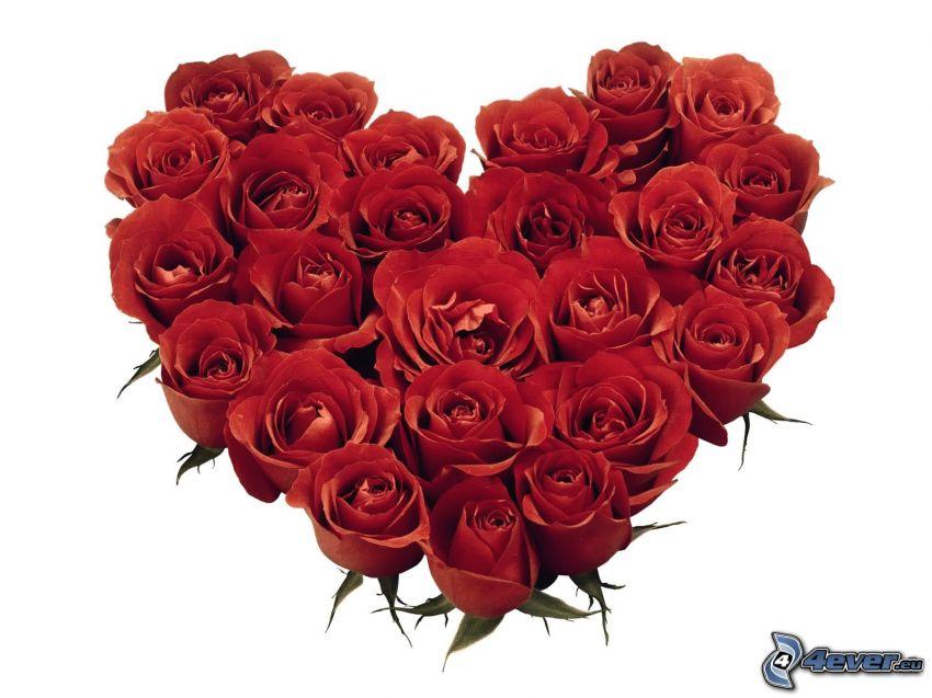 corazón de flores, rosas