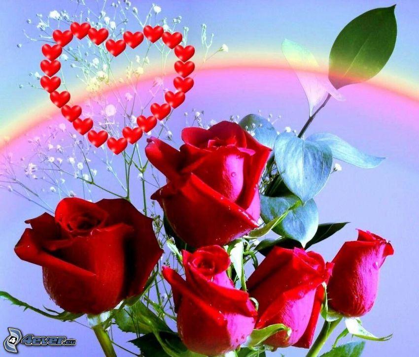 rosas rojas, corazones rojos