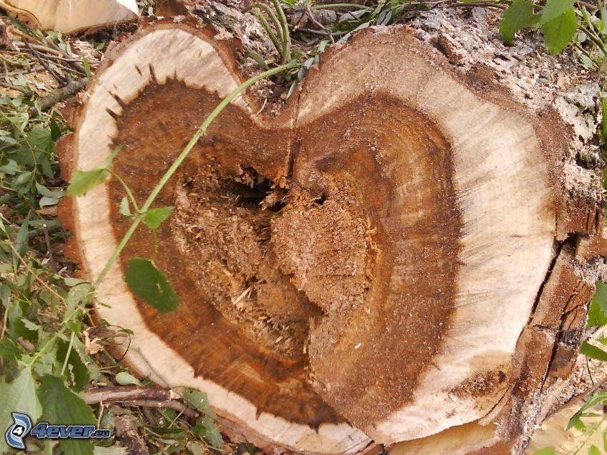 tribu, madera, corazón