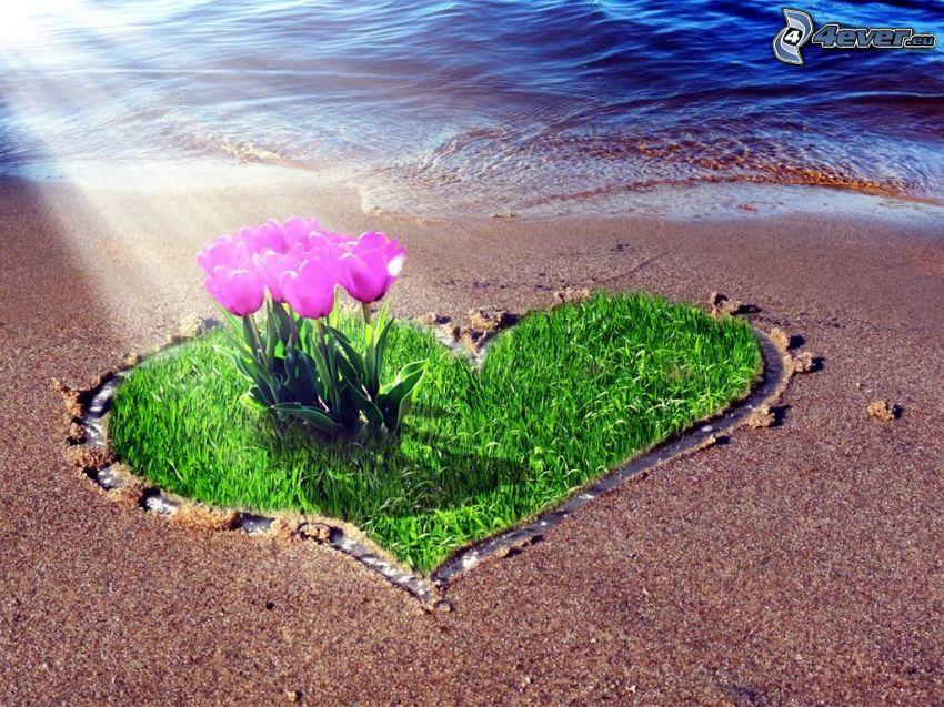 tulipanes de color púrpura, corazón, hierba, playa, rayos de sol